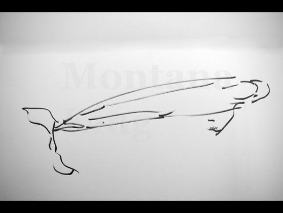 montana-drawing-1